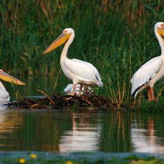 Explore Danube Delta